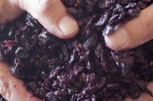 Freshly pressed grape skins