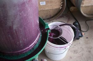 Pressing the Grapes and extracting the wine