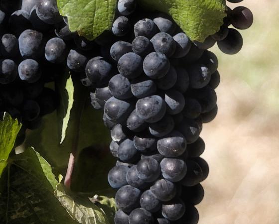 Winemaking Experience